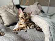 Katze vermisst Braucht dringend Medikamente