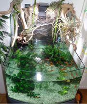 Aquaterrarium mit Fischen Technik und