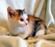 Kätzchen in bunten Herbstfarben 1rot