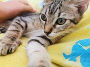 Kitten auf Körbchensuche