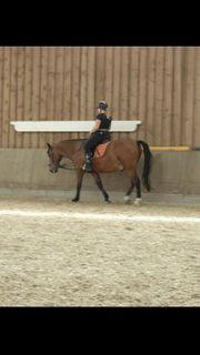 Pflege Reitbeteiligung Reiter sucht Pferd