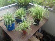 Alles für Haus Möbel Pflanzen