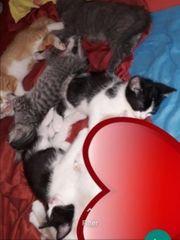 5 süße kitten 2 schwarzweiss
