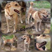 Wunderschöner Rüde Romeo 7 Jahre
