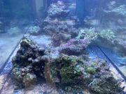Meerwasseraquarium Riffgestein abzugeben