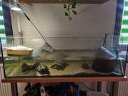 2 Wasserschildkröten mit Aquarium und