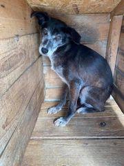 Hundeoma sucht Menschen mit Herz