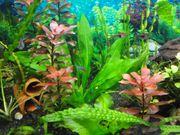 Algenfreie und gesunde Pflanzen