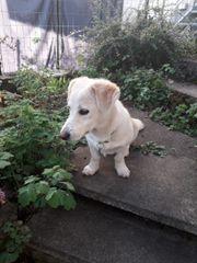 Hundemädchen Ayla sucht ein liebevolles