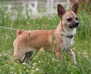 Greta - Welpe aus dem Tierschutz -
