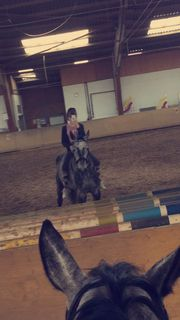 Suche Reitbeteiligung auf Pferd Pony