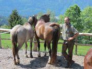 Pferdeausbildung Reitunterricht
