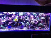 Meereswasseraquarium Meerwasser Aquarium komplett für