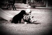 Bernersennen Hund Welpen