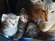 welpen Babys kitten Katze