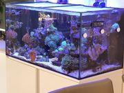 Eheim Proxima Reef 250 weiß