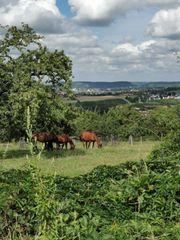 Einstellplatz für Kleinpferd oder Pony