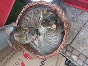 Katzenpärchen