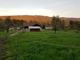 Pferdepensionsplatz: Kleinanzeigen aus Sigmarszell - Rubrik Pferdeboxen, Stellplätze