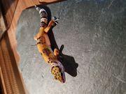Leopardgecko 2021 NZ