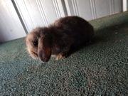 Kaninchen 10 Wochen alt VB