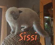 schöne Edelmix Kitten