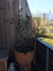 Blumentopf Terrakotta