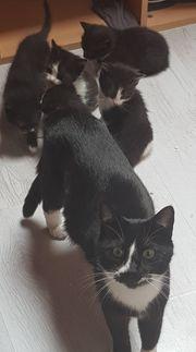 Zauberhafte Katzenwelpen suchen neue Freunde