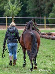 Haus Hof Grundstück zur Pferdehaltung