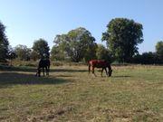 Suchen Grundstück zur Pferdehaltung