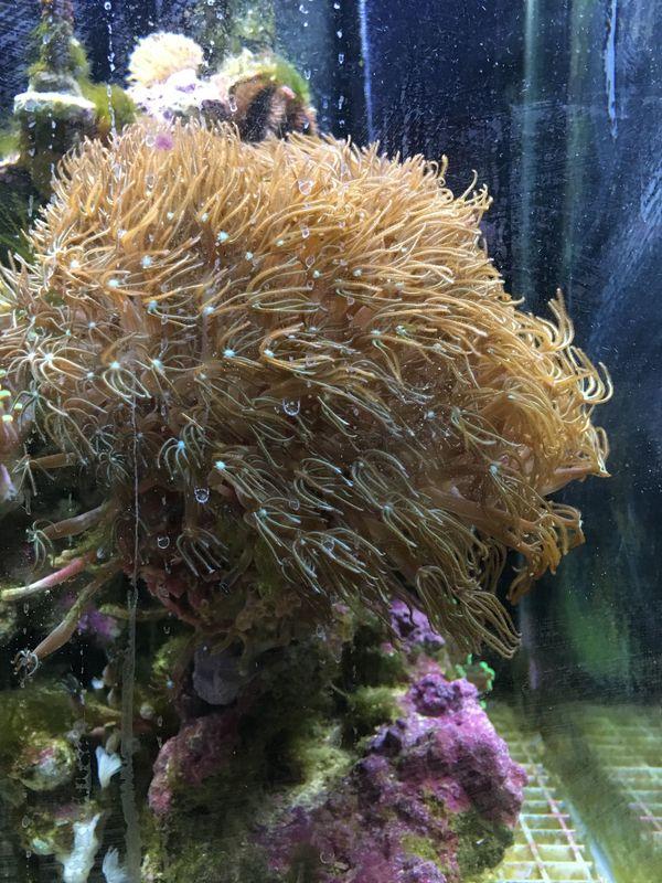 Korallen und Seeigel abzugeben