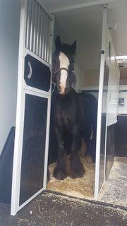 Pferdetransporte Pierkes fragen