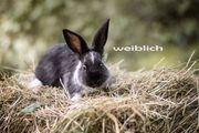 Hobby Kaninchen abzugeben