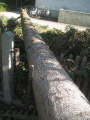 Stammholz 10 80m Nordmann-Tanne - zu