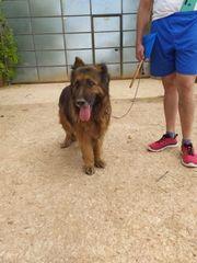 Luna14 ältere Hundedame sucht ein