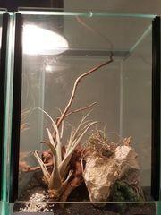 Terrarium 20x20x30 mit kleiner Teufelsblume