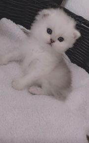 schone kleine Katzen