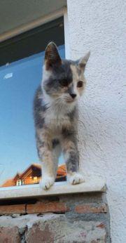 Bahati Katze aus dem Tierschutz
