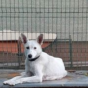 MIRA ein liebenswerter Familienhund