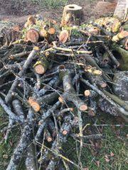 Brennholz Baumstämme für Selbstabholer