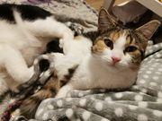 Junge Katze - Schmusige Schmusemaus Simona