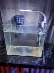 Aufzuchtbecken Nano Aquarium Meerwasser Süßwasser