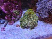 Biete kompletten Meerwasser Aquarium Besatz