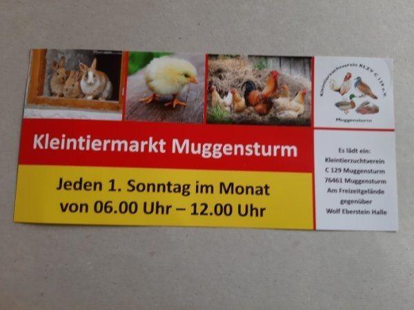Vogel-Kleintiermarkt