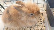 2 Kaninchen Junge und Mädchen