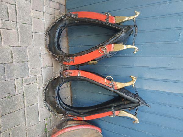 2 tolle Pferdekummet Haflinger Reitponys