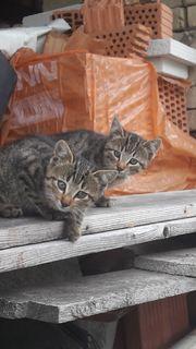 2 Kätzchen abzugeben