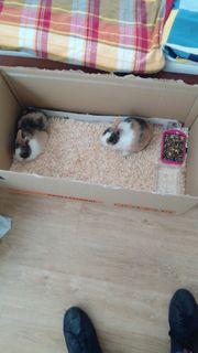 2 süße Kaninchen suchen neues
