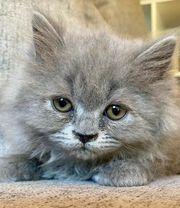 BKH BLH Kitte sucht ein