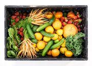 Packer für Bio-Obst- Gemüse-Kisten sowie